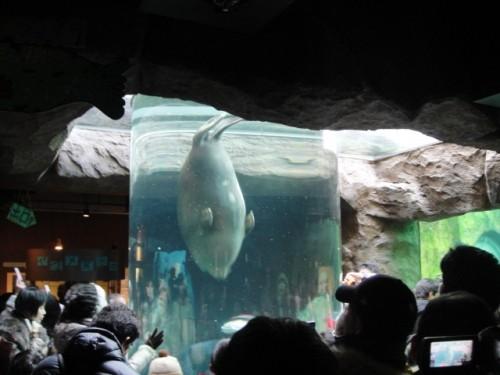 やっぱり、あさひやま動物園。