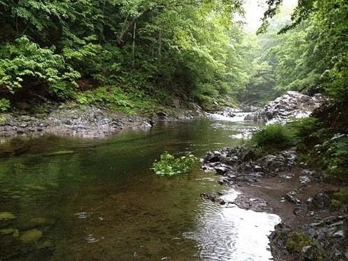 初夏の渓流釣り♪とマナー・・・