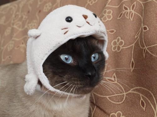 猫かぶり。。。|グレとブギウギ...