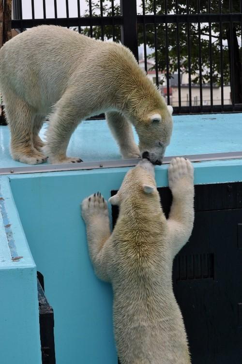 2010年9月19日~おびひろ動物園・イコロとキロル~13時前まで