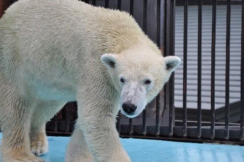 2010年9月19日~おびひろ動物園・イコロとキロル~13時過ぎ
