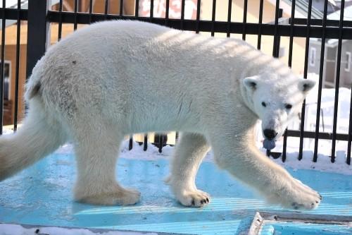 1月28日~おびひろ動物園・イコロ~開園から12時台