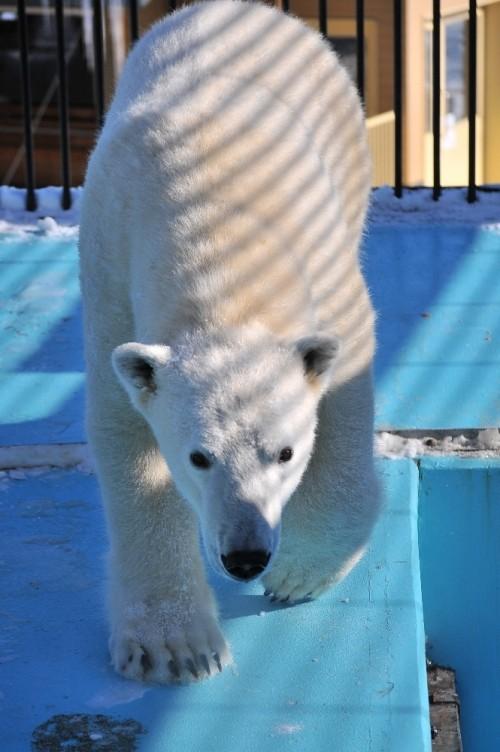 1月27日~おびひろ動物園・イコロ~12時台から閉園まで