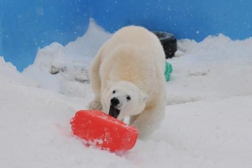 2月19日~円山動物園・ララ&アイラ~15時台(送る会続き)