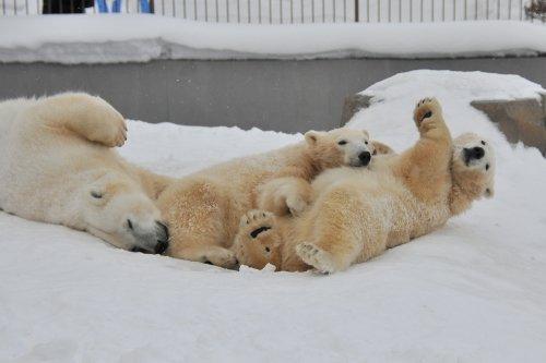 2月1日~円山動物園・ララ&ポロマル~11時台から14時台
