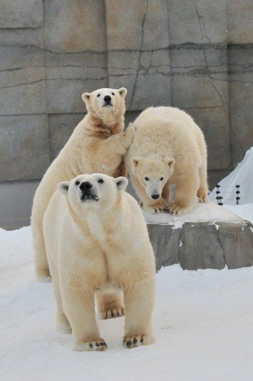 2月1日~円山動物園・ララ&ポロマル~14時台から閉園まで
