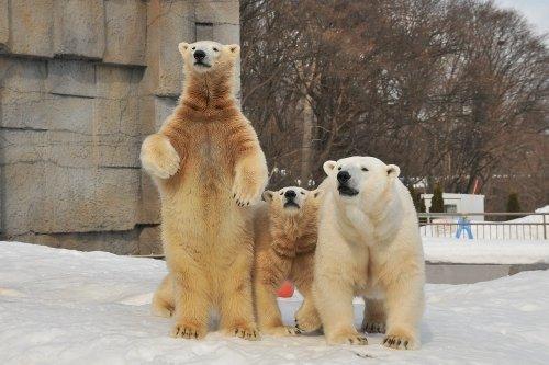 3月1日~円山動物園・ララとポロロとマルル