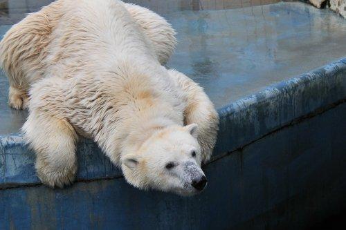 7月19日~釧路市動物園・ツヨシ&ミルク~13時台から16時まで