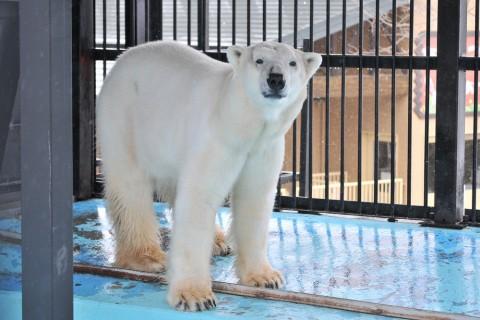 3月22日~おびひろ動物園・イコロ&アイラですが・・・