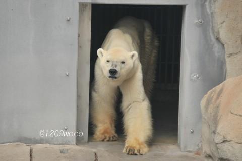 1月13日~王子動物園・アイス