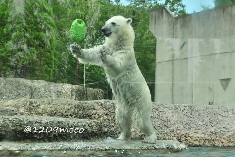 7月18日~とくしま動物園・ポロロ