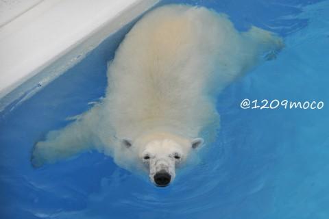 7月19日~熊本市動植物園・マルル