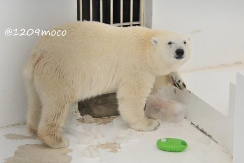 7月20日~熊本市動植物園・マルル