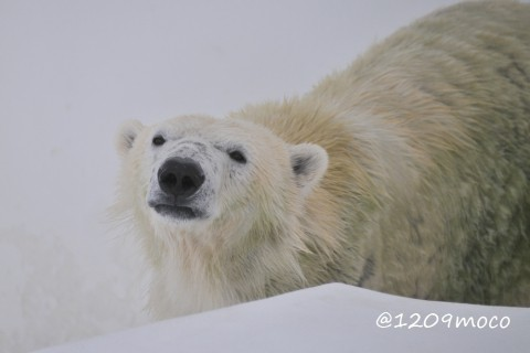 1月10日~熊本市動植物園・マルル
