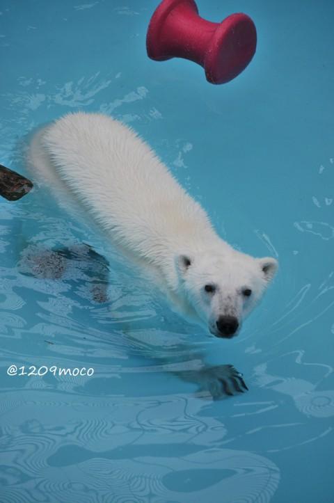 7月18日~おびひろ動物園・アイラ~活魚イベント