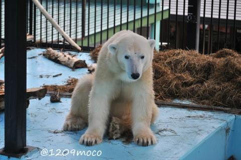9月25日~おびひろ動物園・アイラ~AM