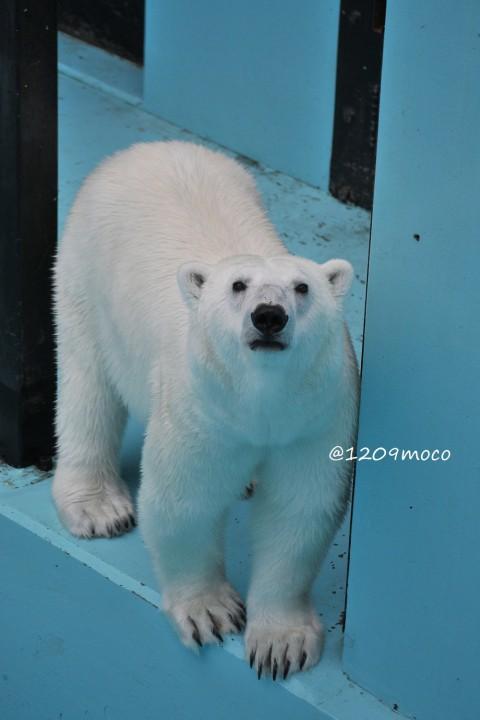 7月17日~おびひろ動物園・アイラ~海の日イベント