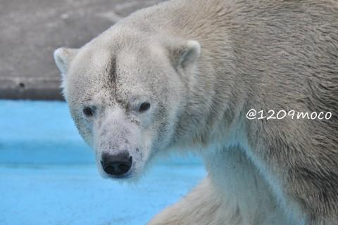 7月16日~釧路市動物園・キロル&ミルク
