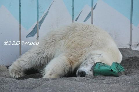 7月15日~釧路市動物園・キロル&ミルク