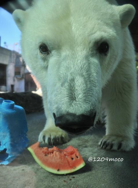 9月18日~とくしま動物園・ポロロ