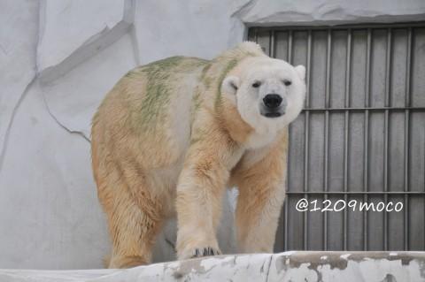 9月15日~東山動植物園・サスカッチ~はじめまして!