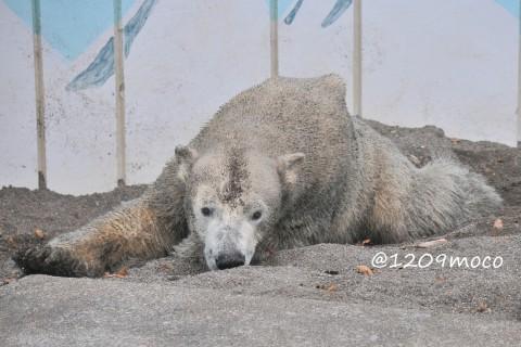 11月3日~釧路市動物園・キロル&ミルク