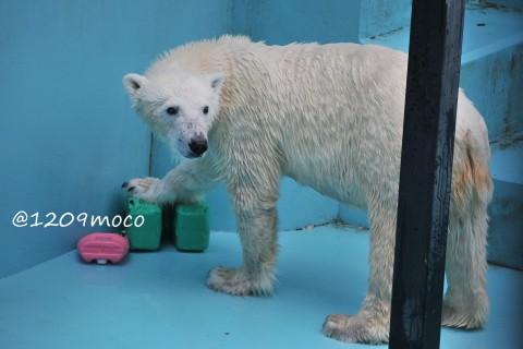 11月4日~おびひろ動物園・アイラ