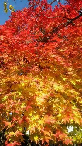 パワーチャージできる季節の色