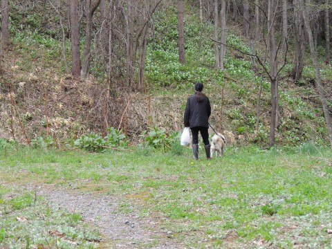山散歩。5月4日。