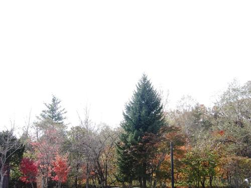 ミーナの庭の窓から<2010.10.28>