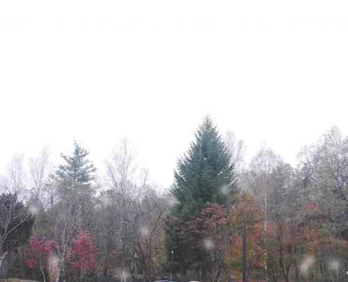 ミーナの庭の窓から<2010.11.01>
