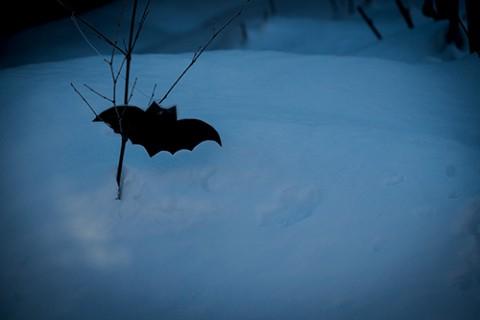 庭のコウモリ