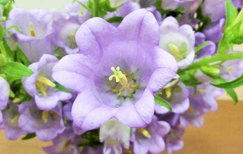 夏のお花もお目見え!