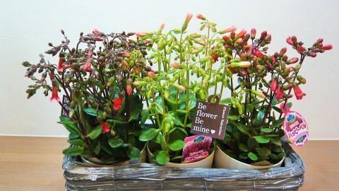 春の花鉢入荷しました!!