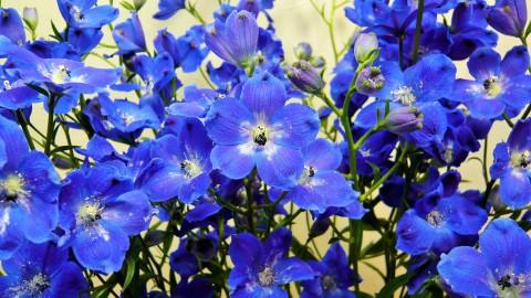 夏のお花もお目見えです!