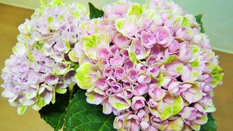 どんより・・・気分転換にお花を・・・