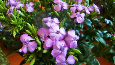 敬老の日にお花のプレゼントを!