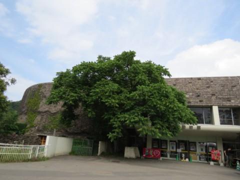 熱帯動物館