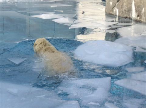 氷の中をゆく