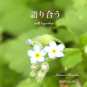 9月16日の心の羅針盤~デイリーエナジーメッセージ