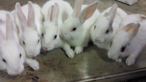 ウサギちゃん生まれました~。