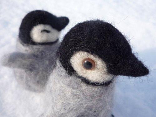 まだ、よちよち歩きの ペンギン。