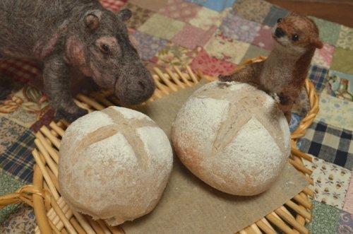 桑の実のパンが焼けたよ!