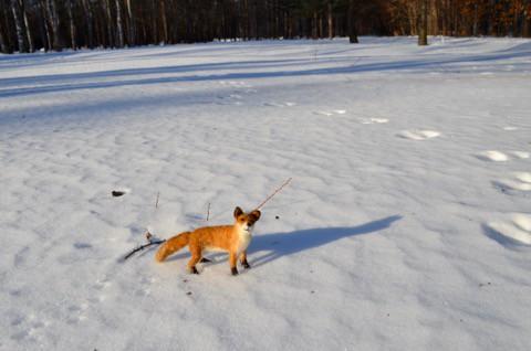 羊毛フェルトで キタキツネ 雪の上で^^