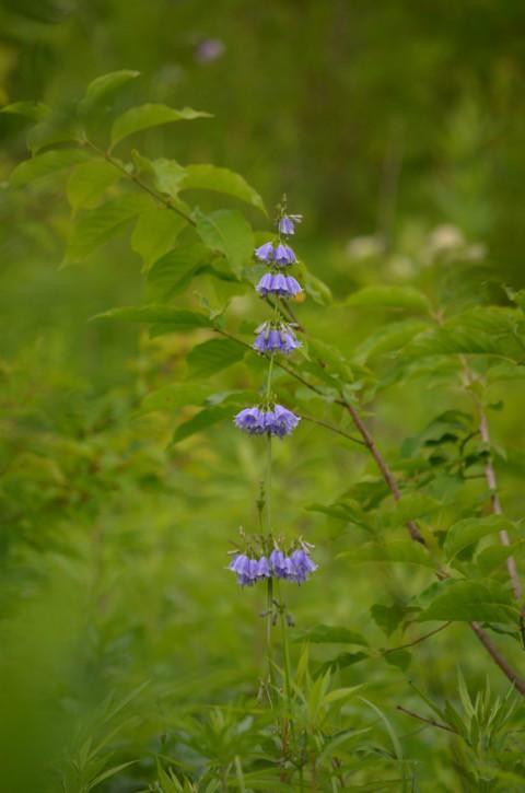 森を歩くと 今が旬な植物^^
