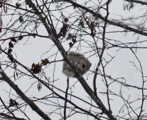 雪の日の モモちゃん^^