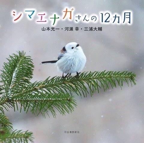 写真集「シマエナガさんの12ヶ月」本日18:10~NHKほっとニュース北海道!