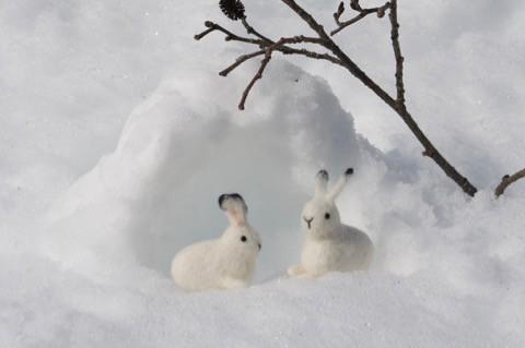 白い雪に ユキウサギ^^