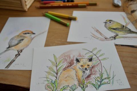 鳥と子ぎつねも 描いてみた!
