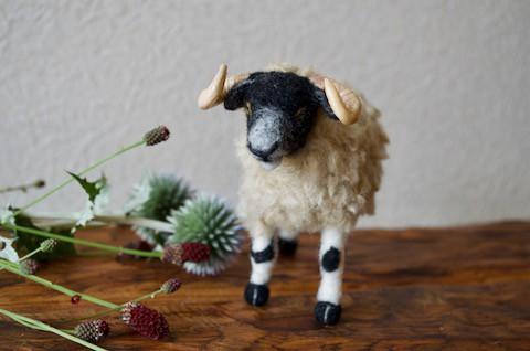 個性的な羊を プレゼントにと〜!!